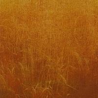 Gum-bichromate-Field-Of-Gold