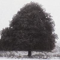 Gum-bichromate-Summer-Tree