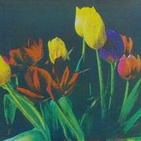 Gum-bichromate-Tulips-2