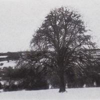 Gum-bichromate-Winter-Tree-In-Snow