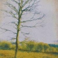 Gum-bichromate-Winter-Tree