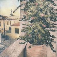 Cyanotype-Bougainvilleas-grow-in-Crete