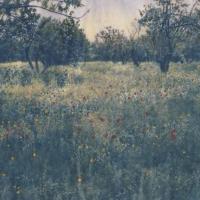 Cyanotype-Springtime