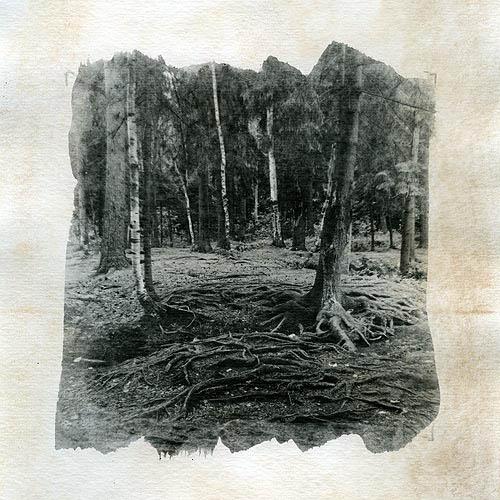 Liquid emulsion Roots