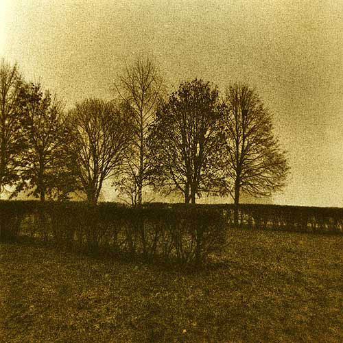 Lith print Trees