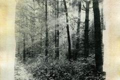 Liquid emulsion Sunrise in the forest