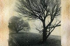 Liquid emulsion The willows