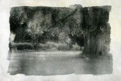 Liquid emulsion Tree