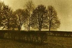 Lith print Trees