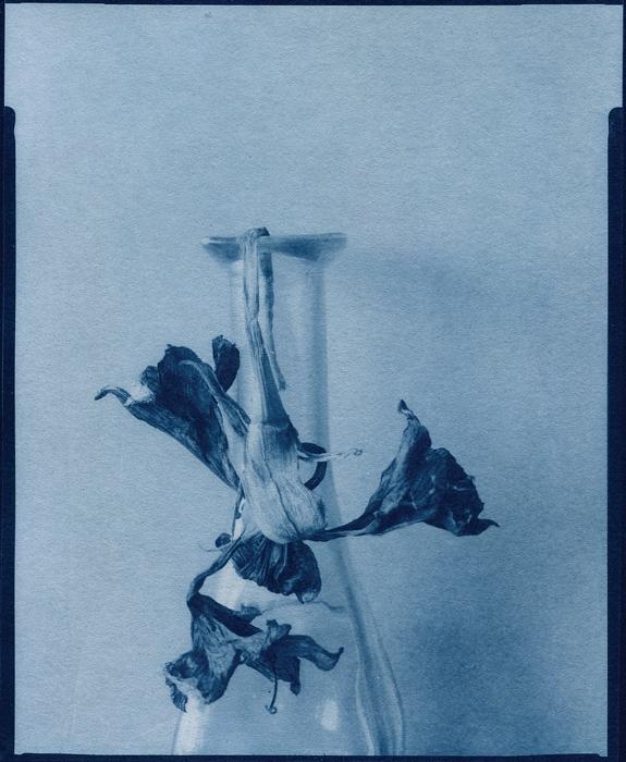 Cyanotype-PostBloom