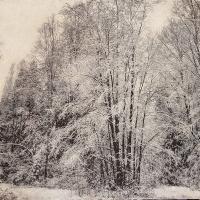 Winter 112x80