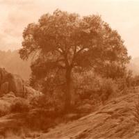Carbon-print-Cottonwood-Eastern-Sierra