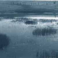 Carbon-print-Pond-Near-Carmel