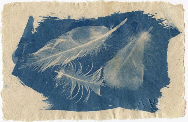Cyanotype Feathers