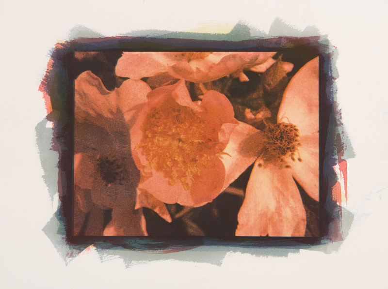 Tri color gum Old Rose