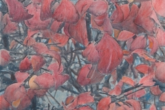 Cyanotype handcolored Burning Bush