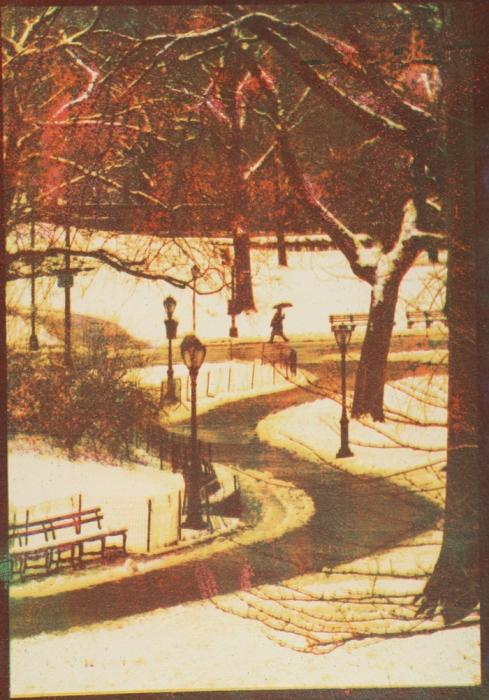 Tricolor gum Central Park, NYC