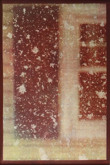 Tricolor gum Snow