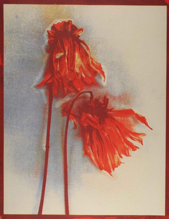 Tricolor gum Untitled-07