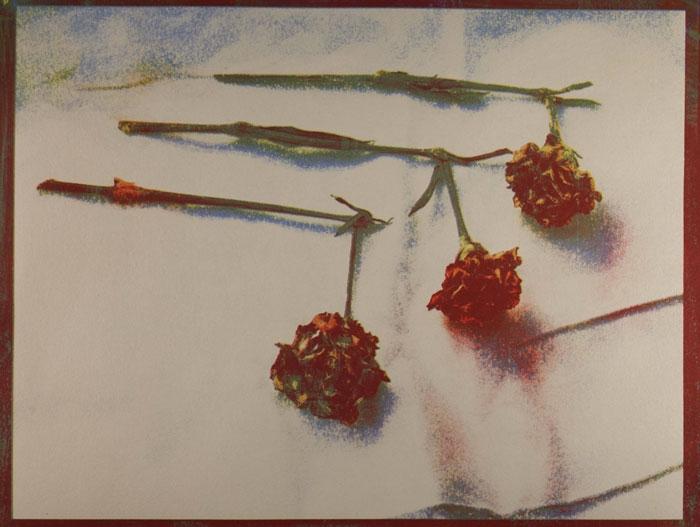 Tricolor gum Untitled-09