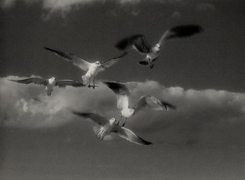 Infrared handpainted print Seagulls