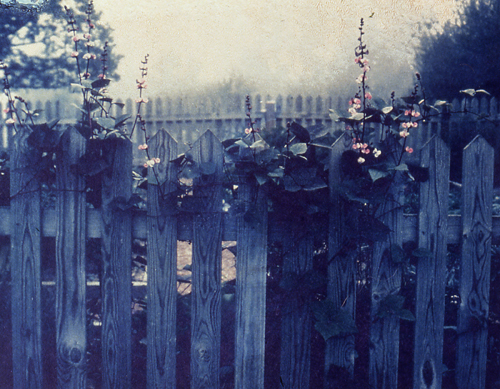 Polaroid image transfer Fence