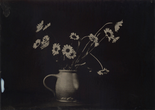 Wetplate collodion Dasies in Pitcher