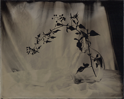 Wetplate collodion Vine in Bottle