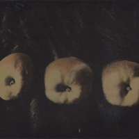 Dry plate Apples