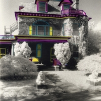 Infrared handpainted print Painted Lady
