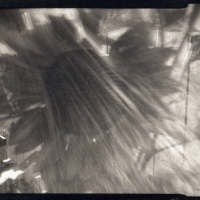 Platinum palladium pinhole Mystical Sunflower