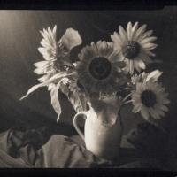 Platinum palladium print Sunflowers