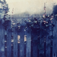 Polaroid image transfer Fence