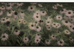 Infrared handpainted print Coneflowers