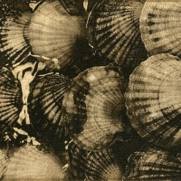 Solarplate intaglio Scallops at the Market