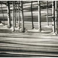 Photogravure-Aspen-in-a-stream