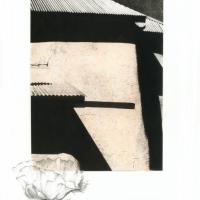 Photogravure-Prickly-poppy-study