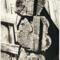 Photogravure-Shifting-Timbers