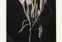 Photogravure Spider study