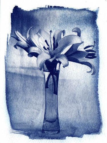 Cyanotype Vase of lilies