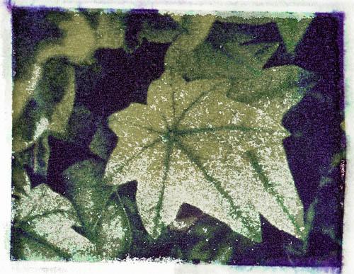 Polaroid transfer Ivy
