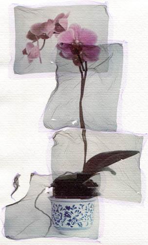 Polaroid transfer Orchid joiner