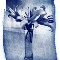 Cyanotype Vase of lilies