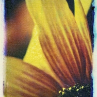 Polaroid transfer Flower