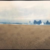 Blue Van Dyke Sown
