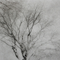 Bromoil trees3