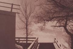 Toned Cyanotype Looking Up