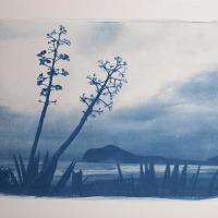 01-Cyanotype-Atardecer
