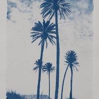 04-Cyanotype-Palmeras