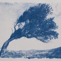 07-Cyanotype-Playazo